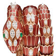 Bvlgari Serpenti Jewellery Watches 102527 SP40PGD2PGD1RL.2T